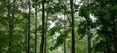 联合国:1990年至今全球共失去1.78亿公顷森林 但损失速度已显著放缓