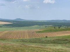铲毁2万多亩将熟麦子油菜,为完成退耕