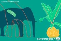 世界大象日:濒危的巨兽,面临的威胁不止是盗猎