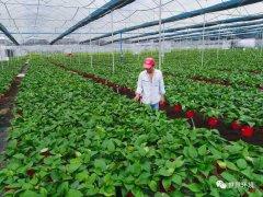 """""""禁塑""""专栏:中国农膜污染治理现状及展望"""