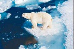 北极何时无冰?专家:可能20年后