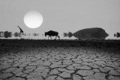 命是空调给的……这个世纪到底会有多热?