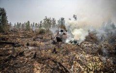 """疫情期间砍树更凶 印尼3月毁林面积"""""""