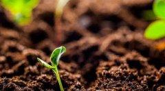 """孙宁:对""""十四五""""土壤污染防治的政策建议"""