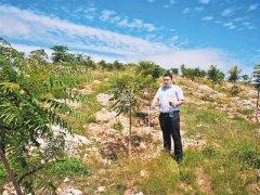 废弃矿山变身绿色屏障――河北隆尧县山口镇实施生态修复绿色发展见闻