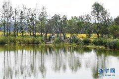 重庆市委书记、市长调研广阳岛生态修