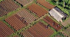 餐桌上的减碳计划:智库研究改善粮食系统 可实现2050
