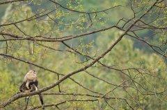 从爱知到昆明,我们和森林有个约定