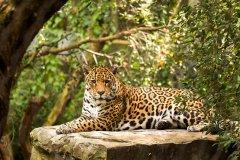 巴西大沼泽火灾 美洲豹主要栖息地逾7成烧毁
