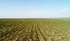 292000公里的播种路,他用14600天让草