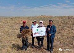 关晓彤粉丝爱心梭梭,助力防沙植树|中国绿发会蒙古扁桃保护地