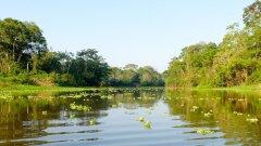 研究示警:亚马逊雨林四成似稀树草原 逼近不可逆临界