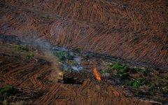 联合国:恢复自然环境的资金缺口 高达7000亿美元