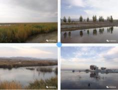 博斯腾湖:水草丰美,一条调查样线的鸟类就
