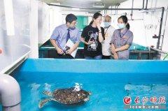 长沙市检察机关采取行动 20余只珍贵濒危海