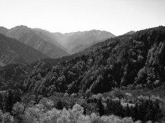 """20个""""爱知县生物多样性目标""""无一实现 应对全球自然"""