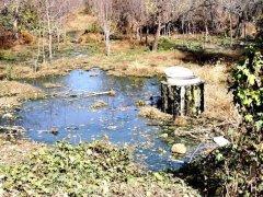 无名污水管道排污水气味刺鼻,数十棵