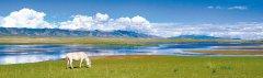 青海省推动黄河流域生态保护和高质量发展领