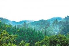 研究发现:实现碳平衡,森林或是有力