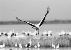 湿地环境不断改善 保护意识明显提升