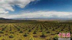 """国家林草局:""""十三五""""期间我国造林5.29亿亩"""