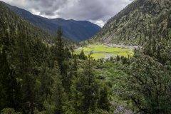 2030年森林目标有望提前达成,科学管