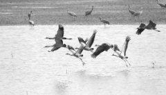 又见鸥鹭成群,又见绿草如茵 推动长江
