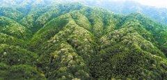 """坚持""""绿水青山就是金山银山""""理念 促进经济社会发展"""
