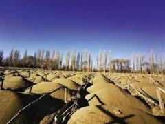 敦煌万亩沙漠防护林被毁:生态保护不