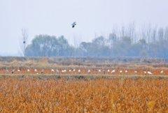 河南受保护湿地面积达476万亩 近五年
