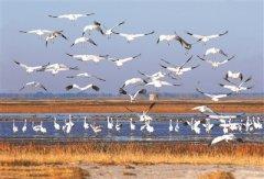 吉林湿地保护率5年由35%增加到47%