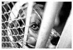 韩国《动物保护法》实施细则强化对烈性犬管理