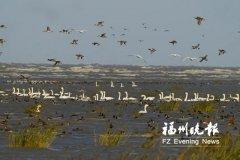 """国家重点野生动物从54种增至80种 闽江河口湿地成为"""""""