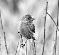 光噪污染影响鸟类存亡