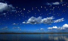聚焦内蒙古乌梁素海流域生态保护修复