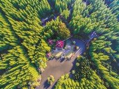 上海人均公园绿地面积8.5平方米