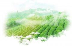 湖北省第三生态环境保护督察组向宜昌