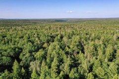 实施23年!吉林天然林资源保护工程都