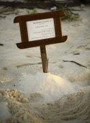 世界海洋日:碧旅阁林旗下五家致力于