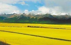 擘画绿色农牧生态蓝图――青海奋力打造绿色有机农畜产