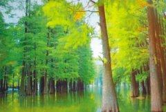 让森林更好看更多彩更健康 绍兴市启动