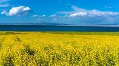青海湖流域10万公顷沙湖地将变新绿