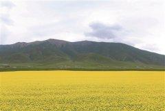 青海:加大修复力度 保护大美草原