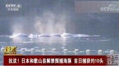 日本公然捕鲸卖给水族馆,现在连科研的幌子都不要了?