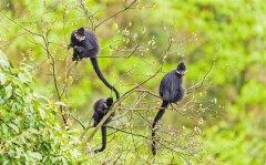 重庆珍稀濒危野生动植物种群实现恢复