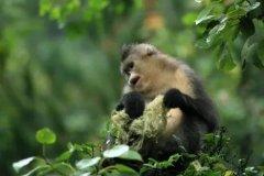 中国生态修复典型案例(8)云南滇金丝猴全境保护