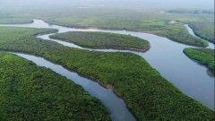 """中国生态修复典型案例(11)红树林变""""金树林"""" 助推"""